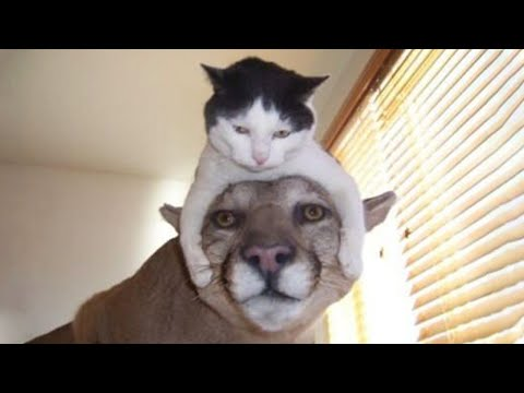 Funniest Animals - Cute Funny Cats And Dogs Video 2020