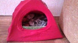 Как сделать домик для кошки. Быстро и просто!