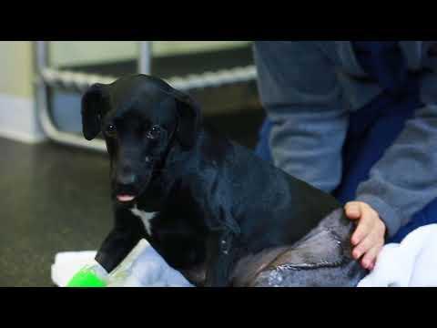 Badly injured dog - Truffles - gets treatment at Mandeville vet hospital.ts