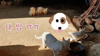 신라조경농원의 동물들♡ 순둥이들 밥을 뺏은 고양이들