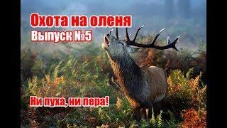 Охота на оленя с подхода видео