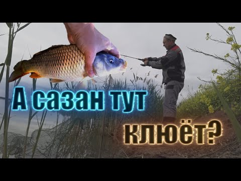 Рыбалка в Кранодарском крае | Карась, сазан и дед )))