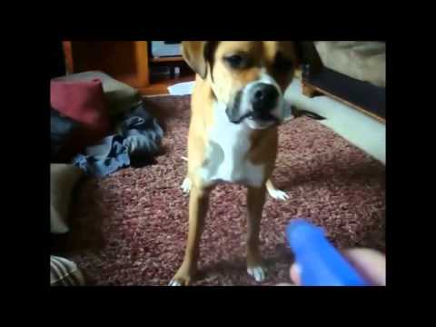 Dog tries to catch water (funny)