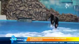 Приморский океанариум представил дебютное шоу после скандала со смертью питомцев