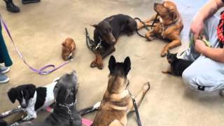 Dog Training | Chicago, Il – Chicago Canine Academy