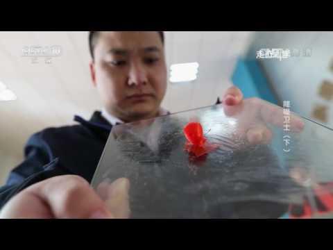 20170112 走近科学降噪卫士(下)