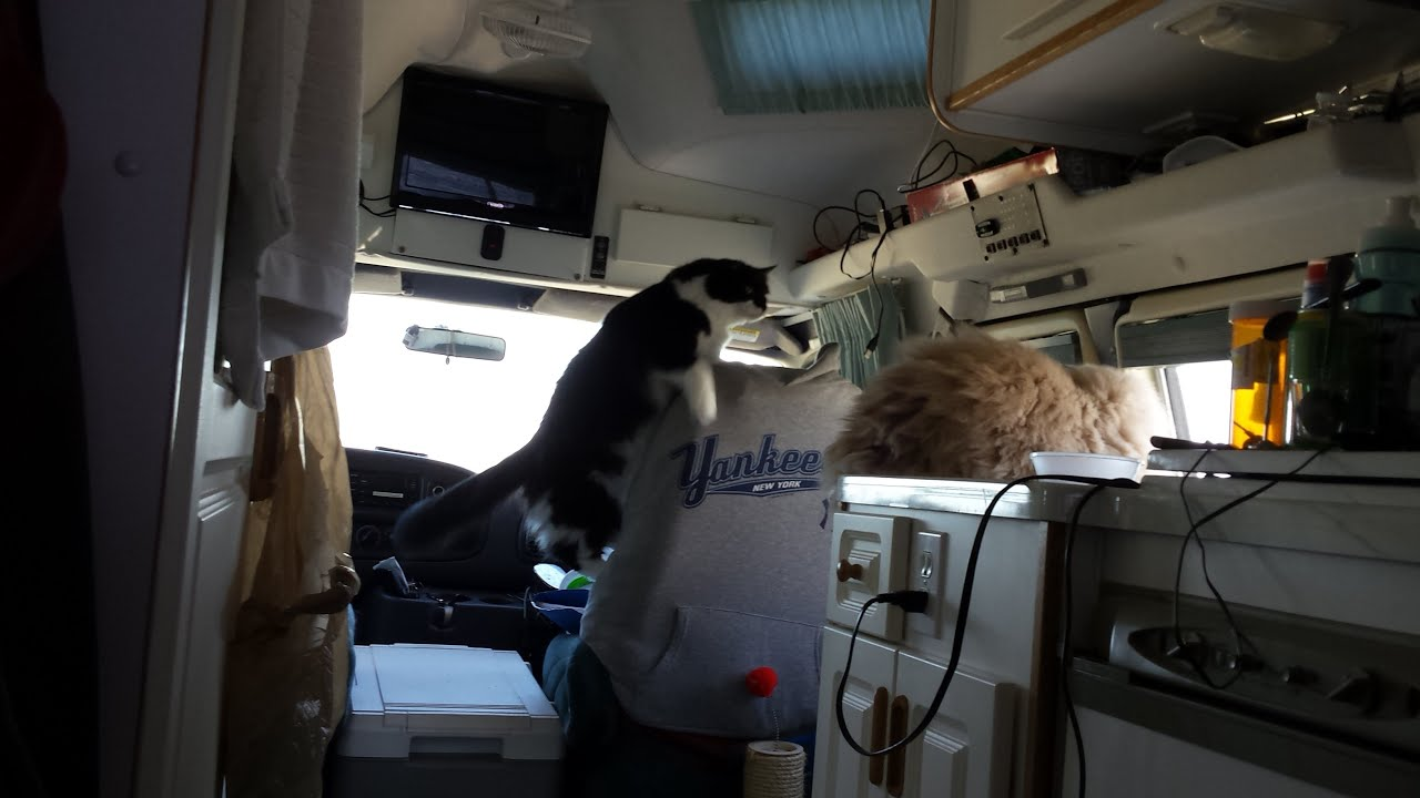 Rv Cats Warning Cat Video Vinny Takes A Fall Youtube