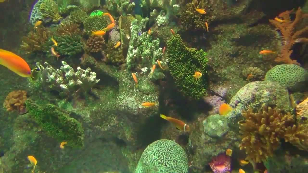 Fish aquarium in bangladesh - Rare Tropical Aquarium Fish Music Aquatics 4000 Gallon Aquarium Rare Fish Rare Tropical Aquarium