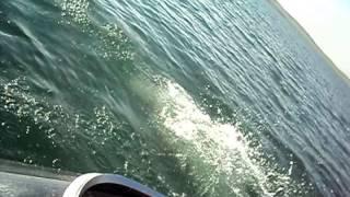 БелЁ 2015(Республика Хакасия, Озеро Беле №2, База Отдыха Тихая Гавань. N54