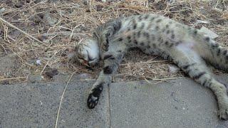Cute pretty wild cats. 2. Милые дикие котики🐈かわいい野生の猫😸귀여운 야생 고양이😾süße wilde Katzen😹Lindos gatos