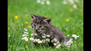 cute pets - Cute and funny cats Compilations