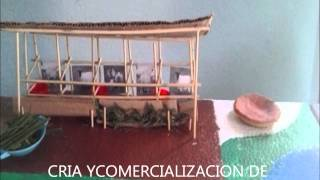 CRIA Y COMERCIALIZACION DE OVEJOS
