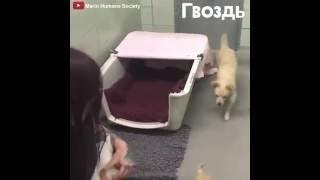 Мама-собака плачет от того, что ей вернули щенков