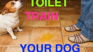 Pee Poles - Toilet Train Your Dogs
