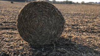 Why Do Farmers Bale Corn Stalks???