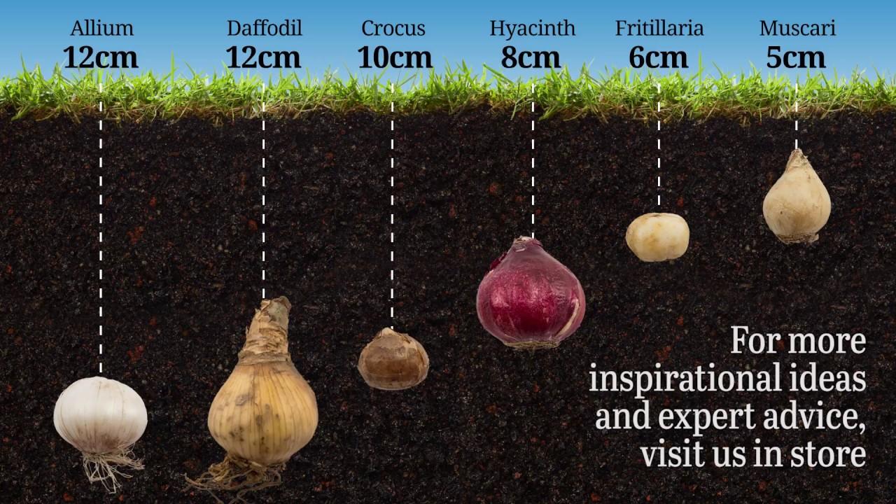 Bulb Planting - YouTube