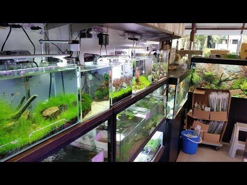 East Ocean Aquatic Aquarium Store Tour