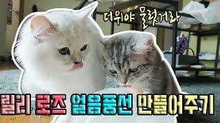 figcaption 여름맞이!! 고양이 얼음풍선 만들어주기 ♥혜서니♥