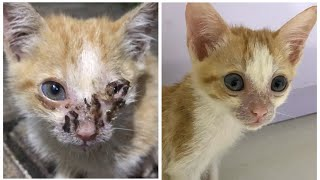 Skinny and starving kitten with his left eye infection l Update l