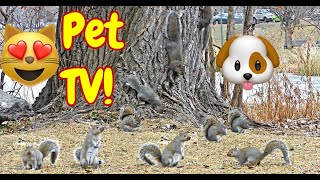 'Squirrels Wrestling' Your Pets Best Life Start HERE!