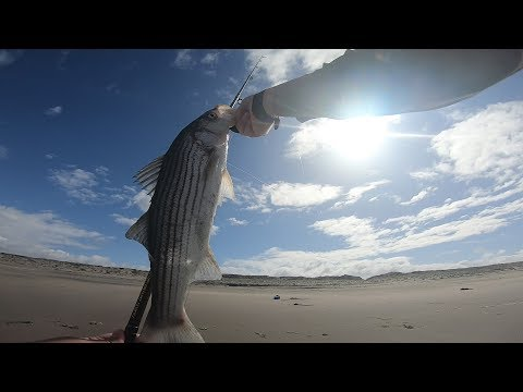 STRIPED BASS Hit Kastmaster AGAIN! | MONTEREY County