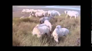 Heureux qui comme Ulysse (1970)