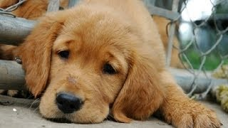 Sehr Traurige Geschichte - Die Geschichte von einem kleinen Hund - Sad Story