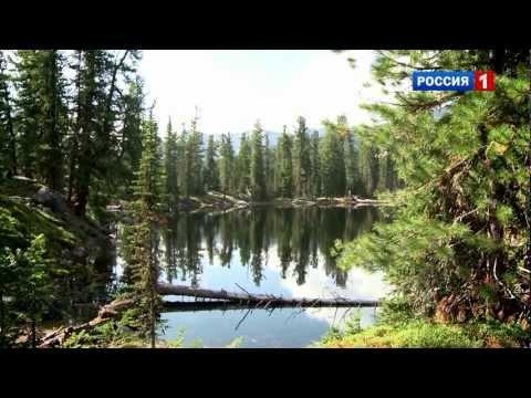Растения Красной книги Красноярского края презентация к
