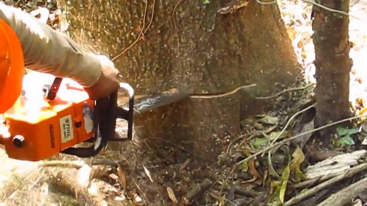 Cortando arboles en salta con motosierra madera - Casas de madera en arboles ...