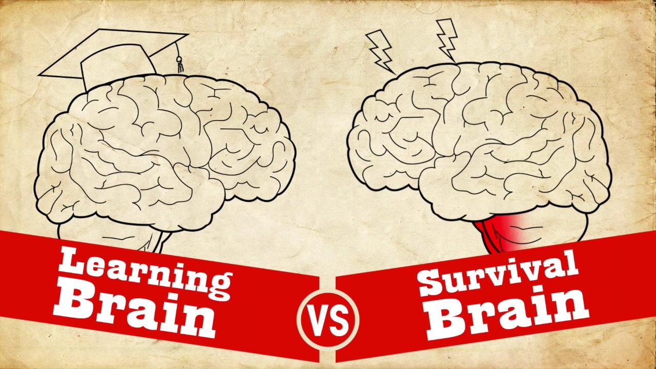 understanding trauma  learning brain vs survival brain