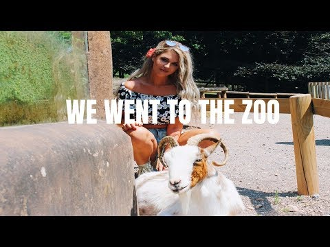 WE WENT TO THE ZOO || SHANNON FOX || from YouTube · Duration:  5 minutes 21 seconds