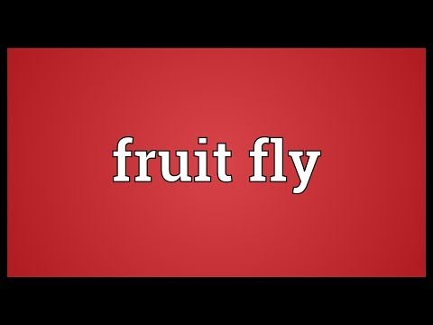 Fruit fly Meaning