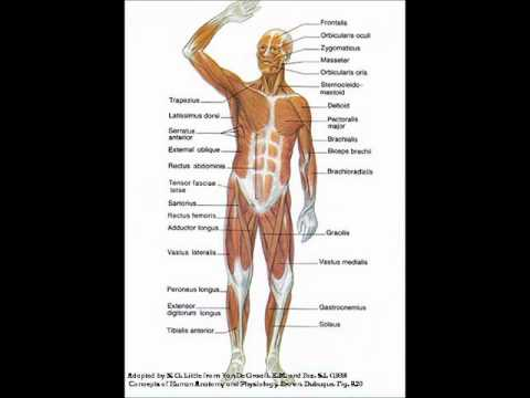 29 Nov Human Anatomy and Physiology from airchel.ru is an ideal ...