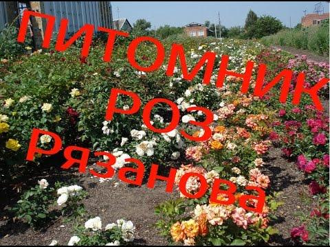 Садовый Декоративный Питомник - YouTube