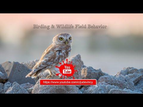 Wildlife Photography Tips    വന്യജീവി ഫോട്ടോഗ്രഫിയുടെ അടിസ്ഥാനങ്ങൾ  Malayalam Vlogger