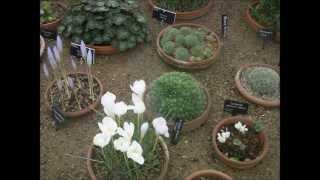 Alpine Plants and Rockery Gardens