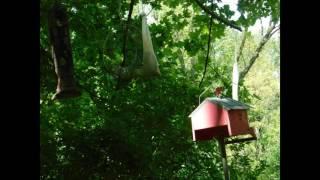 Bird Feeder TimeLapse Test