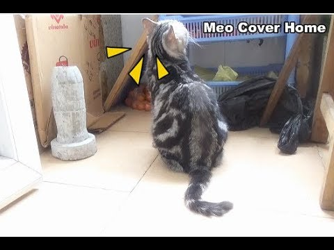 Best Moment Funny Mother Cat And Kittens In Bacolny | Funny Cat Vines 2018 [Funny Pets]