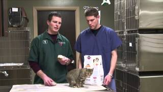 How to Help a Cat Gain Weight