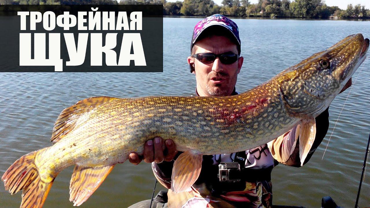 Рыбалка ролики i крупной рыбы