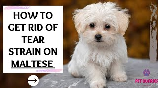 How to get rid of tear stain on Maltese?