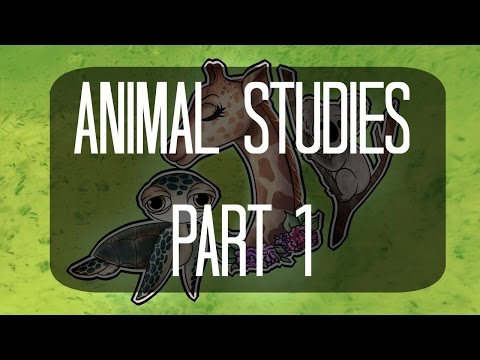Animal Studies: Part 1 (Giraffe, Koala, and Sea Turtle)