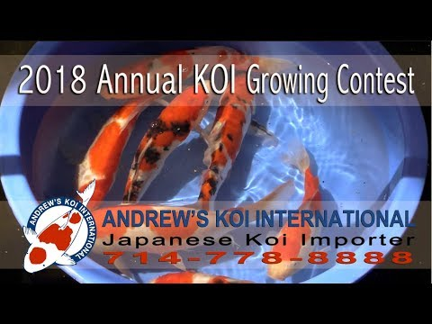 2018 Annual KOI Growing Contest - Andrew's Koi International