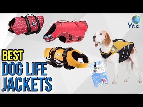 10 Best Dog Life Jackets 2017