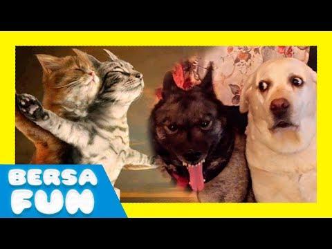Bersa Fun - 020 - Los animales mas graciosos - Fails de animales - Animales chistosos y tiernos