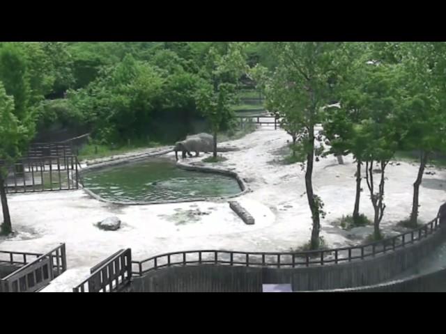 물에 빠진 아기코끼리