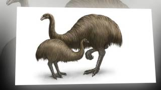 Top 10 Animals that Scientists want to de - extinct