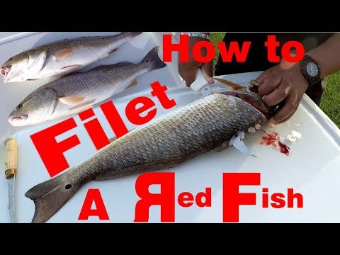 How to Fillet a Redfish