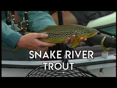 Snake River Trout | Fly Fishing Idaho