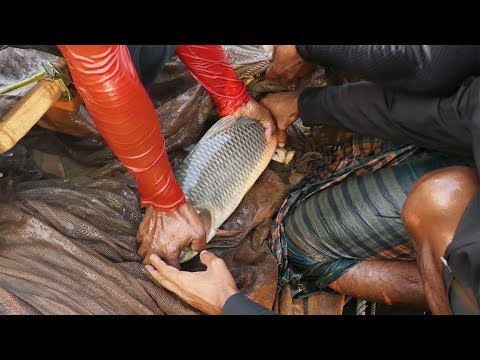 Amazing Big Fishing From River। Village People Traditional Net Fishing